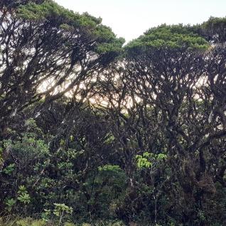 Bonzai forest